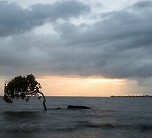 Lonely Tree by Coriena