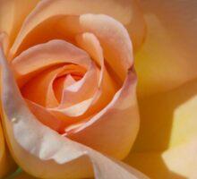 Peach Rose Bud Sticker