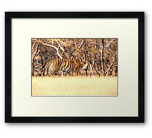 Tiger on the move Framed Print