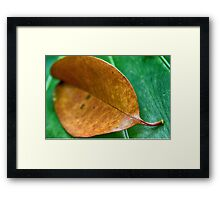 Leaves Of Time (A Study Part 1) Framed Print