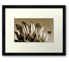 Embracing the Sun Framed Print