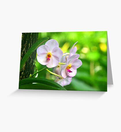Anthropomorphic Aardvark Orchid Greeting Card