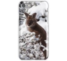 Wallaby in snow iPhone Case/Skin