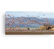 Flight of the Flamingoes Canvas Print
