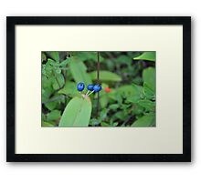 Blue Berries in Green Forest Framed Print