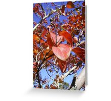 Autumn Red Leaves Greeting Card