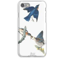 Blue Bird (audubon) iPhone Case/Skin