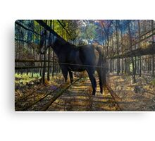 HORSE in the forest Metal Print