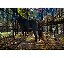 HORSE in the forest Photographic Print