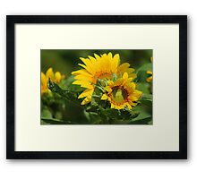 Feel the Sunflower Magic Framed Print