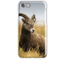 Portrait of a Bighorn - (Ovis condenses) iPhone Case/Skin