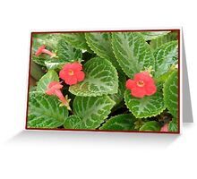 Red Flower Card 2 Greeting Card