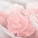 Soft Roses by artsandsoul