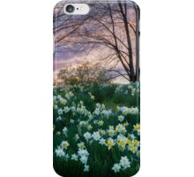 Litchfield Daffodils iPhone Case/Skin