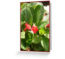 Red Flower Card 1 Greeting Card