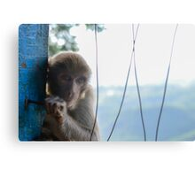 monkeys in the jungle Canvas Print
