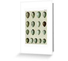 Bird's Eggs Greeting Card