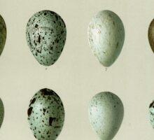Bird's Eggs Sticker