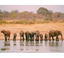 A Herd of Elephants in Zimbabwe Photographic Print