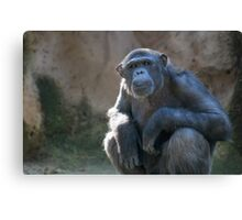 Serious chimp Canvas Print