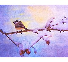 Black Cap Chickadee Winter Twilight Photographic Print