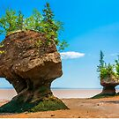 Hopewell Rocks, New Brunswick Canada by kenmo