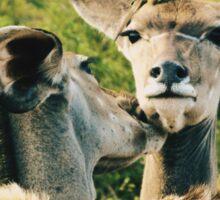 Kudu Modern Family Sticker