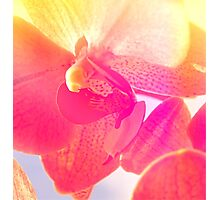 Summer Orchid Photographic Print