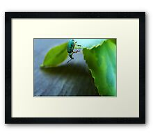 Curious Insect Framed Print