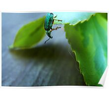 Curious Insect Poster