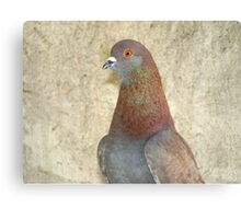 Pinky - Love for Pigeons Canvas Print