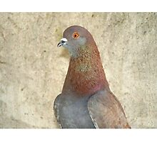 Pinky - Love for Pigeons Photographic Print