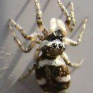 Spiderkin 1 by armadillozenith