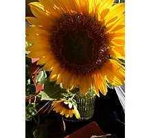 SUNFLOWER BY THE WINDOW Photographic Print
