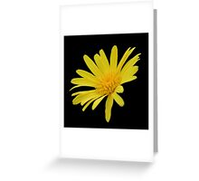 Yellow Daisy Flower Isolated Greeting Card