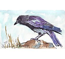 The playful Crow - Coco Photographic Print