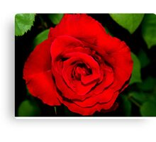 Star-shaped rose Canvas Print