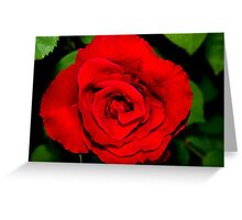 Star-shaped rose Greeting Card