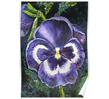 The Giant Purple Pansy Acrylic Painting Poster