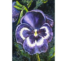 The Giant Purple Pansy Acrylic Painting Photographic Print