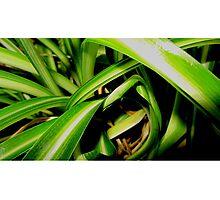 Close up jungle Photographic Print