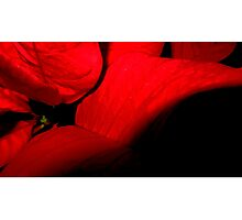 Romantic red leaves Photographic Print