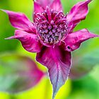 Keep Calm and Bee Balm by alan shapiro