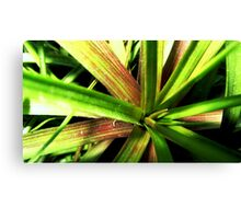 Lost in the jungle Canvas Print