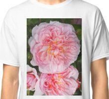 David Austin Rose - Anne Boleyn Classic T-Shirt