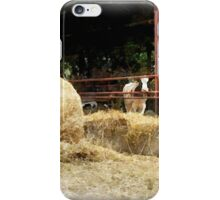 Cows with hay iPhone Case/Skin