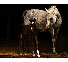 Arabian Mare an Foal Photographic Print
