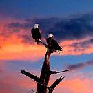 BALD EAGLE SUNSET by TomBaumker