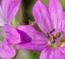 wildflower in the garden Sticker