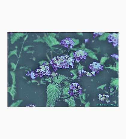 Mosaic Butterfly Blooms Photographic Print